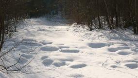 Bevroren die bergrivier Becva met heel wat sneeuw in de Beskydy-Bergen, spleten in zeer mooi ijs wordt behandeld en binnen stock video