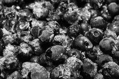 Bevroren die bosbessen met ijskristallen worden behandeld, voedselachtergrond Stock Afbeelding