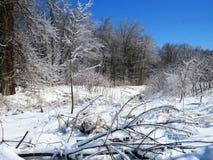 Bevroren die schouwspel van bomen van ijs na een onweer worden behandeld stock afbeeldingen