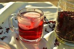 Bevroren die thee met de donkerrode bloemblaadjes van de Hibiscusbloem wordt gemaakt Royalty-vrije Stock Fotografie