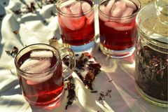 Bevroren die thee met de donkerrode bloemblaadjes van de Hibiscusbloem wordt gemaakt Royalty-vrije Stock Foto's