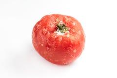 Bevroren die tomaat op witte achtergrond wordt geïsoleerd Stock Afbeeldingen