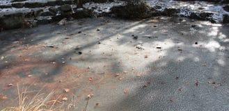 Bevroren die Vijver met Bladeren en Rotsen in de Ijsoppervlakte worden opgesloten Stock Afbeelding