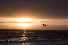 Bevroren door de gouden zon Stock Fotografie