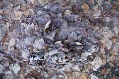 Bevroren droge bladeren Stock Afbeelding