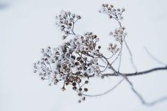 Bevroren droge bloem tijdens Royalty-vrije Stock Afbeeldingen