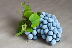 Bevroren druiven stock fotografie