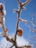 Bevroren Fruit stock afbeelding