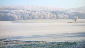 Bevroren gebied en bomen op de koude hazzy winter Royalty-vrije Stock Afbeeldingen