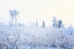 Bevroren graass en sneeuwlandschap Royalty-vrije Stock Afbeelding