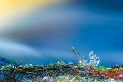 Bevroren gras royalty-vrije stock afbeelding