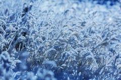 Bevroren gras Royalty-vrije Stock Fotografie