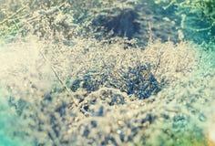 Bevroren gras Stock Foto's