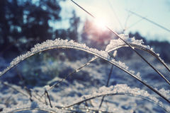 Bevroren gras Stock Fotografie