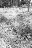Bevroren gras Royalty-vrije Stock Afbeeldingen