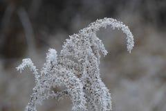 Bevroren gras Stock Foto