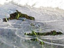 Bevroren gras Royalty-vrije Stock Foto