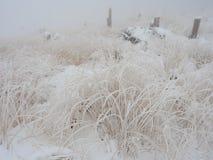 Bevroren gras in bergen in Polen royalty-vrije stock foto