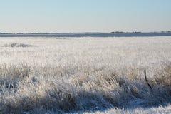 Bevroren gras bij de oceaan stock afbeelding