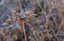 Bevroren gras in de ochtendzon Stock Foto