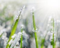 Bevroren gras dicht omhoog Stock Fotografie