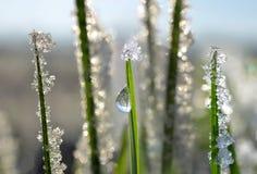Bevroren gras dicht omhoog Stock Foto's