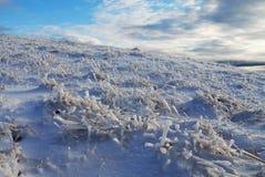 Bevroren groen Stock Afbeeldingen
