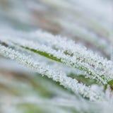 Bevroren groen gras stock foto's