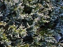Bevroren groene takjes royalty-vrije stock fotografie