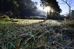 Bevroren grond in Angkang Royalty-vrije Stock Afbeelding