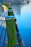 Bevroren houtpijler in de winter Stock Foto