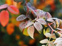 Bevroren ijzig blad bij grond stock afbeelding