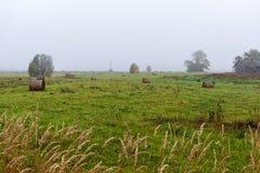 bevroren ijzig gras bents in de recente herfst met de winter komst stock foto