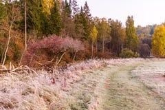 bevroren ijzig gras bents in de recente herfst met de winter komst royalty-vrije stock foto's