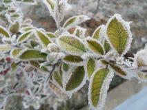 Bevroren installatie tijdens de winterdagen stock afbeeldingen