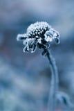 Bevroren jonge bloem royalty-vrije stock foto's