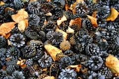 Bevroren kegels en bladeren Royalty-vrije Stock Foto