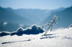 Bevroren kleine boom Stock Afbeeldingen