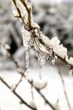 Bevroren knoppen in ijs Stock Foto's