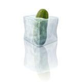 Bevroren komkommer Royalty-vrije Stock Afbeeldingen