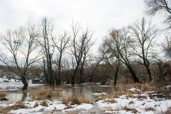 Bevroren kreek die onder donkere bomen dichtbij het de winterbos in februari smelten Royalty-vrije Stock Afbeelding