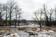 Bevroren kreek die onder donkere bomen dichtbij het de winterbos smelten Royalty-vrije Stock Afbeelding