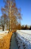 Bevroren kreek met berkboom royalty-vrije stock foto