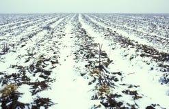 Bevroren landbouwlandschap Stock Foto's
