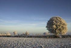Bevroren landschap Royalty-vrije Stock Fotografie