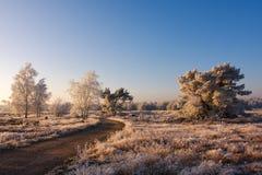 Bevroren landschap royalty-vrije stock afbeelding