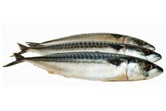 Bevroren makrelen Stock Foto's