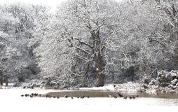 Bevroren meer een gemeenschappelijk gezicht in het midden van de winter stock afbeeldingen