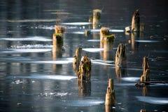 Bevroren meer met stompen Stock Afbeeldingen