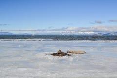 Bevroren Meer Tahoe Stock Afbeelding